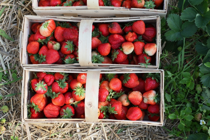 jordgubbar strawberries