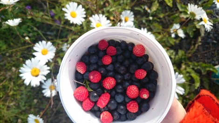 blåbär superbär dietistblogg