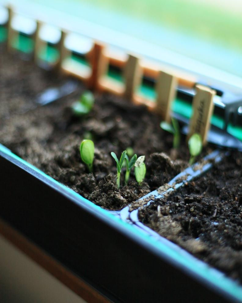 odla för växthus