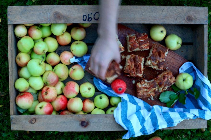 Äppelrutor äppelkaka sockerkaka med äpplen vad kan man göra med sina äpplen baka